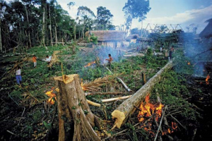 Destruction of Forests in India